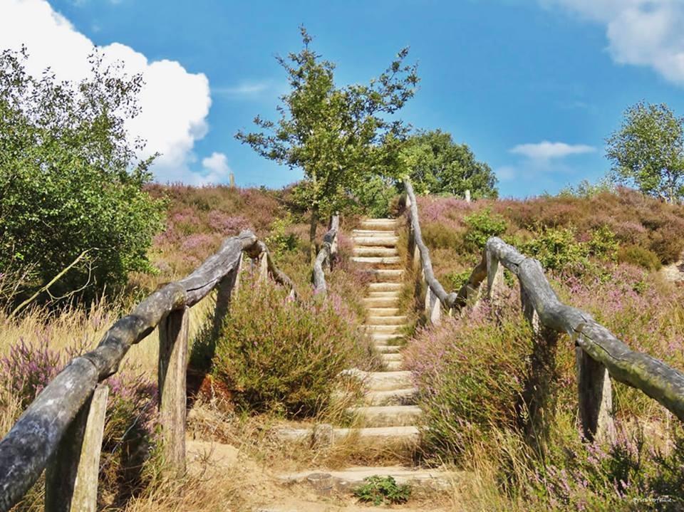 Nationaal Park Hoge Veluwe in Gelderland bezoeken?
