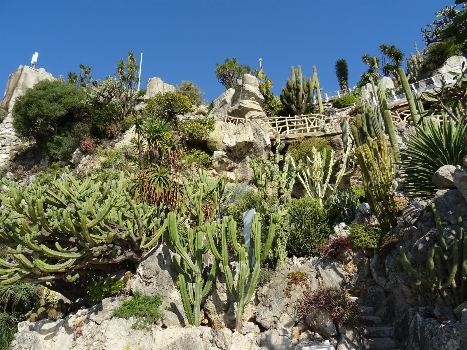 Lees onze tips voor de Jardin Exotique Monaco