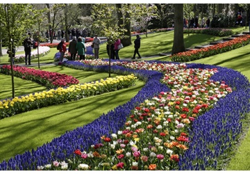Keukenhof 2021: 'A World of Colours'